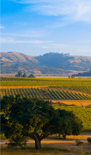 camelot-vineyard